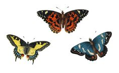 Image from http://desktopbackgrounds4u.com/wp-content/gallery/butterfly-download/germanbutterfliesV2-paperrelics.jpg.