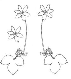 hepatica colouring pattern