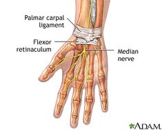 The Carpal Tunnel. The carpal tunnel is a passageway that forms beneath the strong, broad transverse ligament. This ligament is a bridge that extends across the lower palm and connects the bones of the wrist (carpals) that form an arch below the tunnel.  Source: Carpal tunnel syndrome | University of Maryland Medical Center