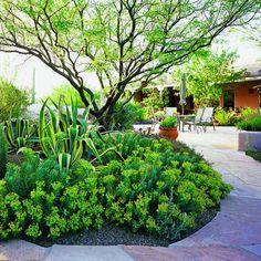 A circular bed creates a focal point in a Tucson backyard