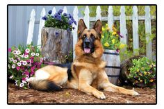 German Shepherd Doormat