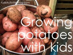 growing potatoes with kids - science experiments, how to see under ground and garden surprises