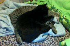 My Litte girl (black) and Honey (striped)!!