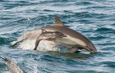 baby dolphin with mama