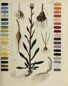 Termini botanici iconibus illustrati :.    Berlin :Bey W. Öhmigke dem Jüngern,1807..    biodiversitylibrary.org/page/53792818