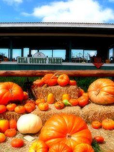 Maui's Pumpkin Patch!!! Kula Country Farms.