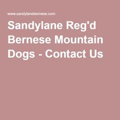 Sandylane Reg'd Bernese Mountain Dogs - Contact Us