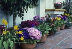 Traditional Garden Photos