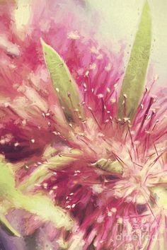 Fine art digital painting of the Australian native Bottlebrush flower species closeup with tones of red and green. Creative Australia flora by Ryan Jorgensen