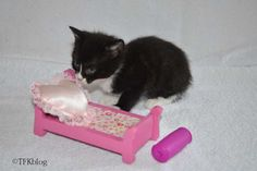 ~Tails from the Foster Kittens~: Update on the kittens
