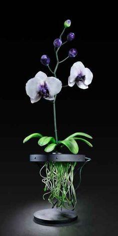 orchidée - Jason Gamrath