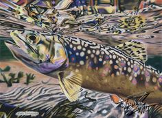 """""""Reverberate"""" Colored pencil drawing of a Brook Trout by Travis J.Sylvester.  Reference photo courtesy of """"Kevin Hospodar"""""""