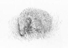 Hedgehog 2 - Hannah Curio