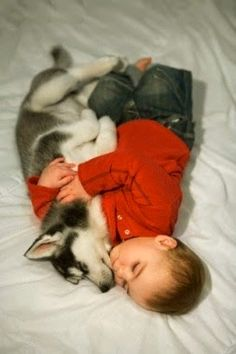 Husky puppy and baby sleeping