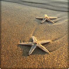 Starfish starfish starfish...