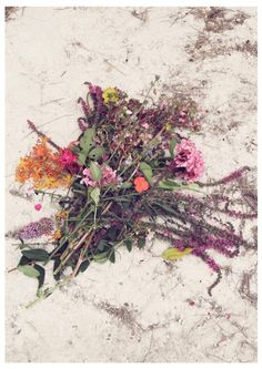 dried flowers are so prreettttttyyy