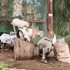 Funny Animal Photos, Cute Animal Videos, Cute Funny Animals, Cute Baby Animals, Funny Dogs, Happy Animals, Animals And Pets, Wild Animals, Animal Antics