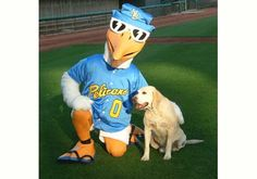Cheer on the Myrtle Beach Pelicans, the official farm team for the Texas Rangers! Myrtle Beach Attractions, Myrtle Beach Resorts, Pelicans Game, South Carolina Coast, Minor League Baseball, Dog Show, Texas Rangers, Cool Pets, Working Dogs