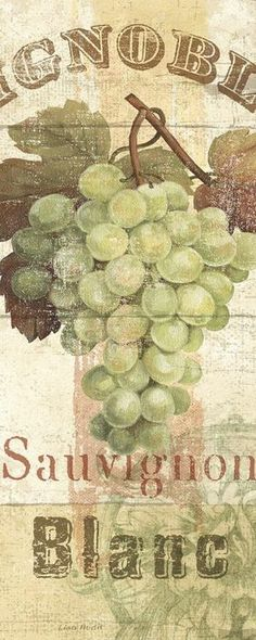 Sauvignon Blanc (Lisa Audit)
