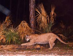 Refuge Update 2012, National Wildlife Refuge System