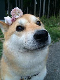 Muco's Cute Spring♡