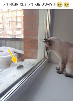 #funny #funnyanimals #cats #mouse