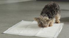 #AmazonBasics Shorts #PuppyTraining Pads 150 pack - YouTube 🏋️♀️ 🎥 🐶 http://rite.ly/KrTH #California #video