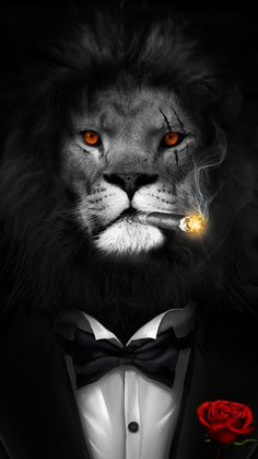 Lion In A Black Suit Very Cool Live Wallpaper Android Live