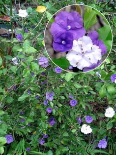 Spring flowers, move over. Theseastounding shrubs can get any gardener through the summer doldrums.