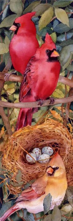 """For man, or for flowers or beast or bird, the supreme triumph is to be most vividly and perfectly alive. Painting called """"The Cardinal Family"""" by Jan Ford. Watercolor Bird, Watercolor Animals, Watercolor Paintings, Watercolors, Pretty Birds, Beautiful Birds, Cardinal Birds, Birds 2, Illustration"""