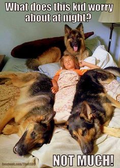 German Shepherds <3