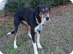 #ALABAMA ~ #URGENT ~ LOVEBUG is an #adoptable #Hound  #Dog in #Mobile. #Adopt Lovebug at  MOBILE COUNTY ANIMAL SHELTER  7665 Howells Ferry Road  Mobile, AL 36618  (251) 574-3647  Hours of Operation:  Monday - Friday  10:00am to 4:30pm