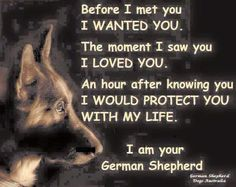 I have 3 fur babied true for my GS, Doberman and lil Chihuahua! Dogs LOVE is like no other!