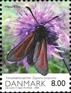 Transparent Burnet (Zygaena purpuralis)
