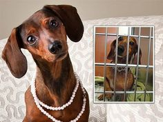 Photographers giving shelter animals professional photos for a better chance at adoption. Love this!
