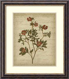 Romantic Pressed Flowers I by Jennifer Goldberger Framed Painting Print