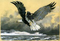 Canis Albus — Kalevala illustrations by Nicolai Kochergin Detailed Paintings, New Fantasy, Epic Art, Fantasy Creatures, Dark Art, Contemporary Artists, Bald Eagle, Illustration Art, Illustrations