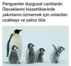 Bilgi Interesting Information, Meaningful Words, Restaurant, Galaxy Wallpaper, Cute Art, Karma, Did You Know, Pets, Best Quotes