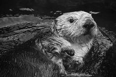 Sweet Otter by DeeOtter.deviantart.com on @DeviantArt