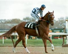 Secretariat - 40 Years Later - Page 2 - Zenyatta Forum. I always loved watching him run. All The Pretty Horses, Beautiful Horses, Animals Beautiful, Beautiful Gorgeous, Appaloosa Horses, Thoroughbred Horse, Horse Galloping, Clydesdale Horses, Breyer Horses