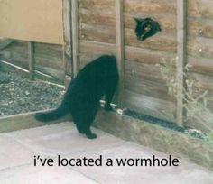 Kitty In Wormhole Meme | Slapcaption.com