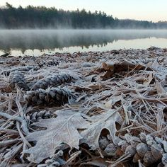 nprfreshair:  First frost at Walden Pond photo by Tim Laman  Crisp, crisp air! (even in Texas)