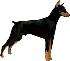 Man's best friends Vectors - Doberman @freebievectors