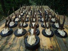 SET 36 ANTIQUE BLACK FOREST ROE DEER ANTLERS CARVED WOOD PLAQUE-WOOD CARVING