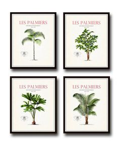 Vintage French Palm Tree Print Set No. 2 - Botanical Prints