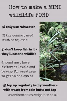 How to make a mini wildlife pond - The Middle-Sized Garden | Gardening Blog