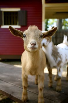 Photos of The Social Goat Bed & Breakfast