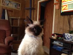Izzy Belle is our Cat of the Week! What a sweetheart.