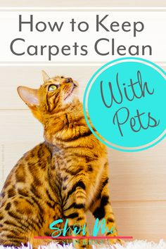 I started doing these 4 things and was amazed at how clean my carpets looked, even with my 2 cats! Great tips on how to keep carpets clean with pets, especially if you have dogs or cats. Awesome tips, ideas, and recommended carpet cleaning products! #carpetcleaning #pets #cleanhouse