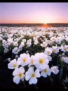 Wild white flowers
